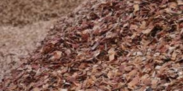 Mangrove Woodchips